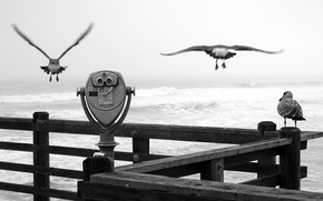 Picture seagulls, black and white, Pier, binoculars
