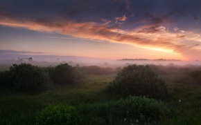 Picture summer, the sky, grass, clouds, light, fog, morning, Russia, the bushes, July