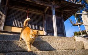 Picture cat, red, steps