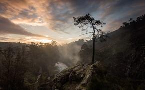 Picture landscape, tree, mountain