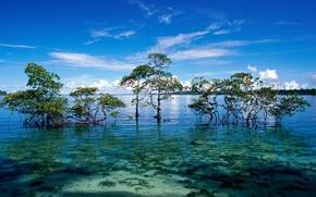 Picture Islands, the ocean, Laguna, mangroves, Andaman and Nicobar islands