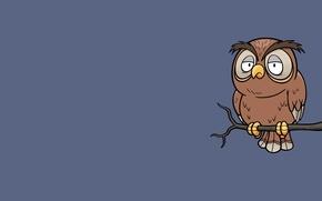 Picture owl, bird, minimalism, branch, owl