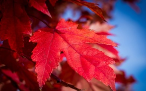 Wallpaper sheet, paint, nature, the sky, autumn, the crimson
