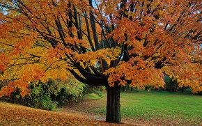 Picture autumn, leaves, Park, tree, garden