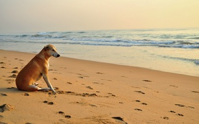 Picture dog, traces, the sun, sea. wave, beach, sand