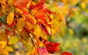 Picture leaves, macro, trees, autumn.