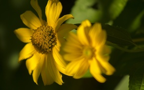 Picture greens, summer, the sun, macro, light, nature, background, bokeh, yellow flowers