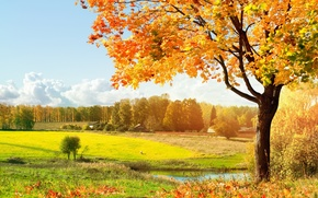 Picture autumn, light, trees, meadow, green, falling leaves, Autumn, warm, solar