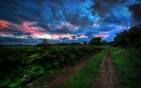 Picture road, summer, the sky, grass, trees, clouds, the evening, gloomy