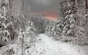Picture winter, forest, the sky, snow, sunset