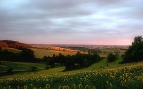Wallpaper hills, field, sunflowers