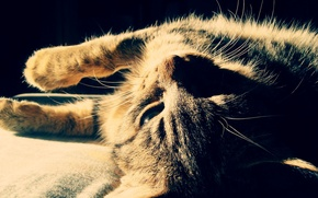 Wallpaper cat, mustache, color, light, face, strips, resting, shadow, wool, contrast, cat
