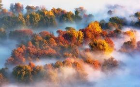 Picture autumn, trees, nature, fog, paint
