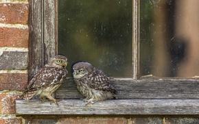 Wallpaper birds, window, wall