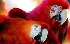 Wallpaper Red, Ara, parrot, Figure