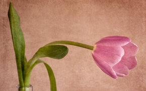 Picture style, background, Tulip