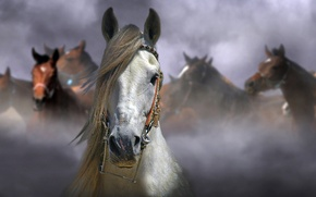 Picture background, horse, blur