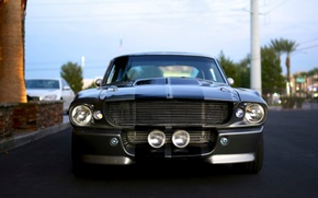 Picture Mustang, Ford, Shelby, Ford, Mustang, Eleanor, GT 500, Grey-Black