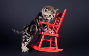 Wallpaper chair, chair, background, kitty