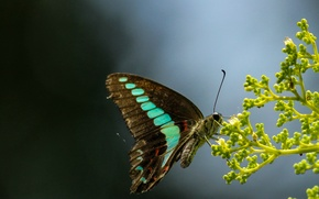 Picture eyes, stems, butterfly, wing, buds, antennae, butterfly, eye, wing, buds, antennae, stalks