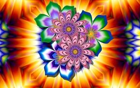 Picture flower, light, pattern, petals