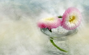 Picture glass, water, flowers, vase, pink and white