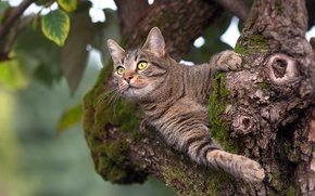 Picture cat, leaves, tree, animal