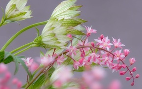 Picture flowers, branch, blur, gentle, pink, Marco