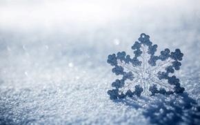 Picture macro, snowflake, snow, ice, winter, nature