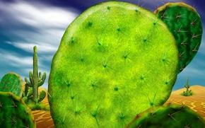 Picture green, desert, cactus