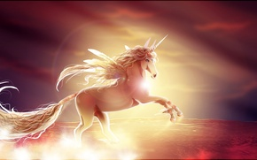 Picture sunset, horse, wings, unicorn
