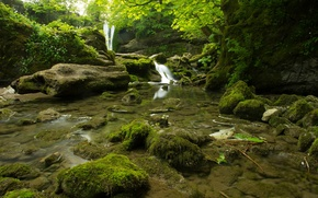 Picture forest, trees, stream, stones, thickets, moss