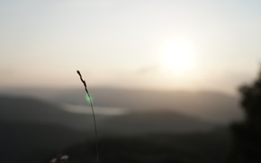 Picture grass, mountains, focus