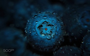 Picture drops, macro, food, blueberries, berry