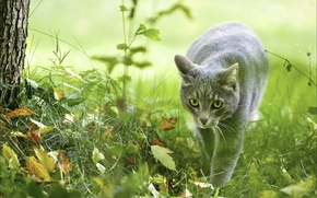Wallpaper animals, Wallpapers, ceramide, cats, nature, hunter, autumn