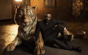 Picture tiger, actor, Idris Elba, Idris Elba, The Jungle Book, voice, The jungle book, Shere Khan