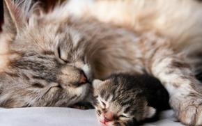 Picture cat, kitty, animal, sleep