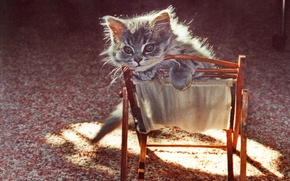 Picture texture, kitty, chair