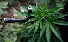 Picture machine, cannabis, ganja, hash, hashish