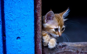 Picture cat, small, red, kitty, cutie