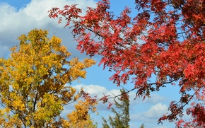 Picture autumn, the sky, leaves, trees, the crimson