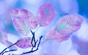 Picture branch, Leaves, blue background