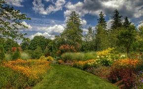 Picture trees, landscape, flowers, Park