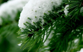 Wallpaper macro, branch, needles, snow, winter, forest