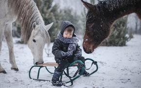 Picture winter, horses, boy