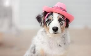 Wallpaper look, each, dog, hat