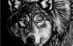 Picture Wolf, Figure, Look, Animals, Face