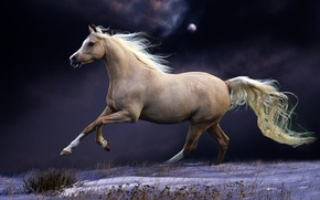Picture HORSE, The SKY, TAIL, NIGHT, SNOW, The MOON, MANE, WHITE, GALLOP