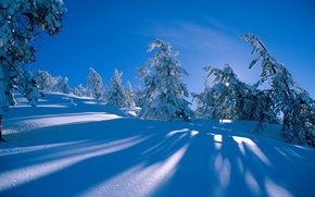 Picture winter, forest, snow, spruce, slope, hill, the snow, shadows, pine