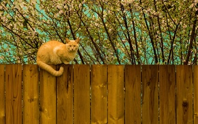 Picture tree, the fence, Kote, red, spring, cat